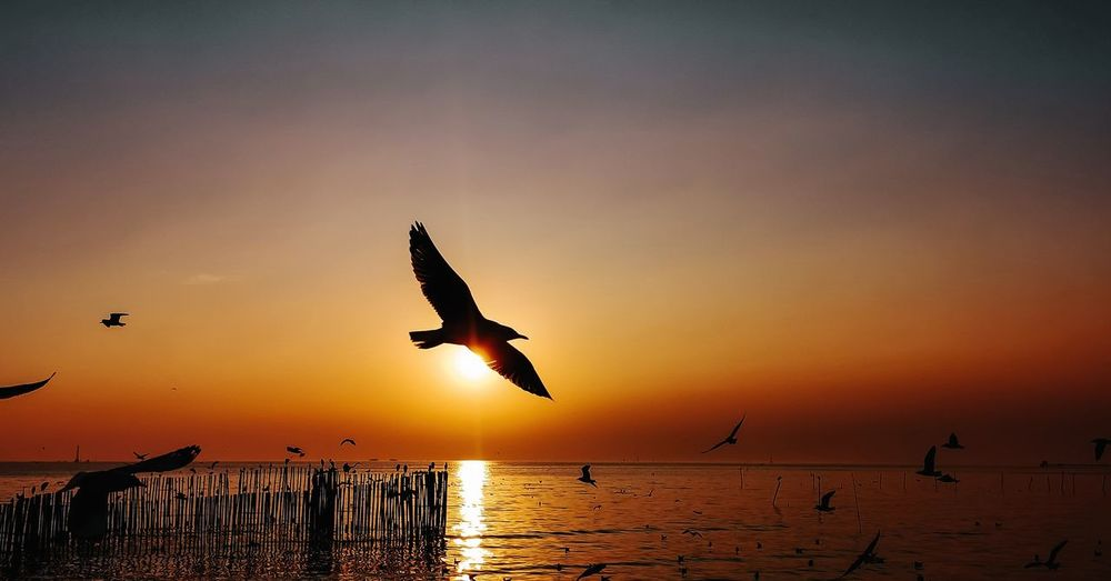 Seagulls flying in sky during sunset