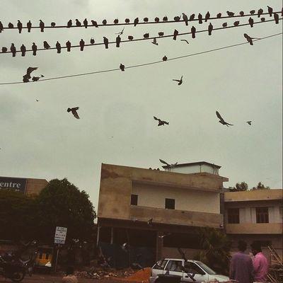 Karachi rains. Karachi Pakistan Photographerslifeforme Birdsofinstagram Birdsonaline Photo Photos Pic Pics Picture Pictures Snapshot Art Beautiful Instagood Picoftheday Photooftheday Color All_shots Exposure Composition Focus Capture Moment Aimanadeel
