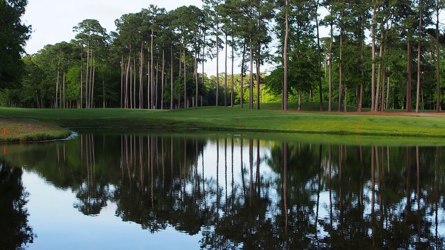 pine tree reflections in pond water Bradleywarren Photography Bradley Olson Room For Text Room For Copy Copy Space Copyspace Backgrounds Background South Carolina Pine Tree Pine Woodland Pine Trees Reflections In The Water Pond Reflections Water Reflections Reflection Green Nature Pinetrees Pine Forest Pine Cones Golf Course Tree Golf Water Green - Golf Course Palm Tree Reflection Sky Green Color Pond