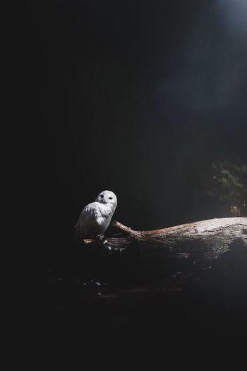 Close-up of bird on night