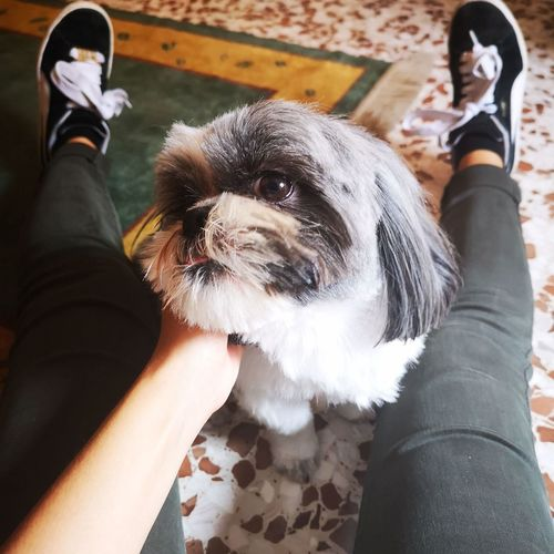 Pretty dog P20 Pro P20prophotography P20photography Huaweip20pro Huaweip20 Shih Tzu Natura Cane Animali Cani Coccole Carezze Pets Pet Dog Puppy Sweet Human Hand Pets Low Section Dog Friendship Human Leg Close-up Personal Perspective Shoe