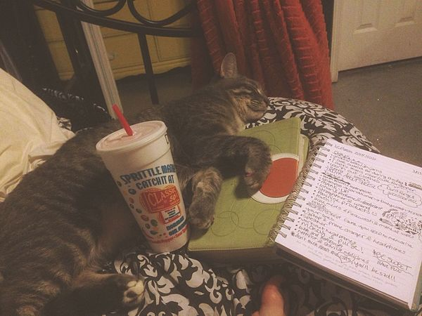 kitten & a slushie & a packing list & a foot!!!!! Busybee Love Sopumped Lovemypals