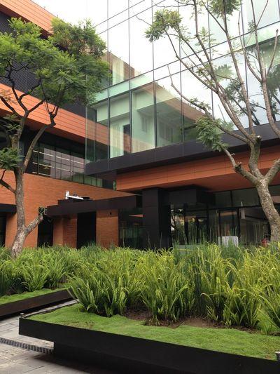 Architecture Trees Grass Plants 🌱 Half&half