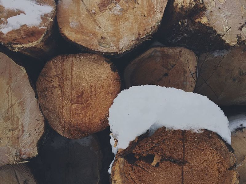 snow, frost, and the crackling fire...❄️🌬🔥What could be better? a real Russian winter🇷🇺 Nature Brown No People Close-up Backgrounds Outdoors Day Lovephotography  EyeEm NewYear Eye4photography  Traveling Russia Nature Forest Tree Wood Firewood Warm Atmosphere Atmospheric Mood Winter Snow Frost Cold Happyholidays