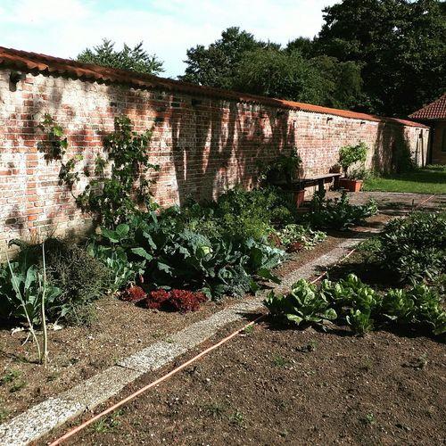 Ich wünschte so würde auch mein Gemüsebeet aussehen :-) Garten Gemüse