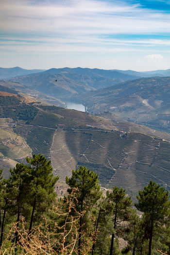 Douro valley landscapes , Portugal Douro  Pattern, Texture, Shape And Form Portugal Beauty In Nature Cloud - Sky Day Environment High Angle View Idyllic Land Landscape Mountain Mountain Range Nature No People Non-urban Scene Outdoors Plant Scenics - Nature Sky Tranquil Scene Tranquility Tree