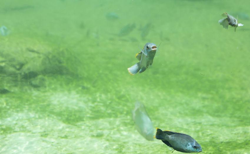 View of fish swimming in lake