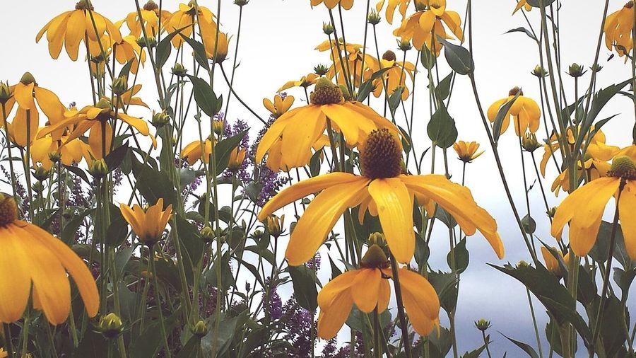 Nature_collection Flowers,Plants & Garden Garden Hello World EyeEm Nature Lover Walking Around