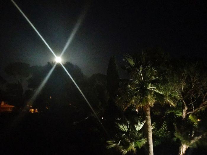 Night Tree Sky Illuminated No People Plant Low Angle View