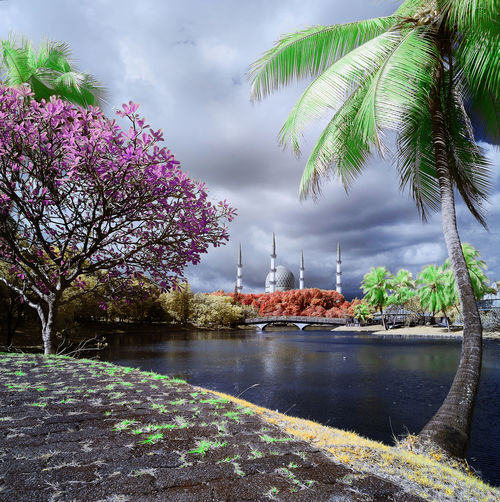 shah alam in infrared Architecture Beauty In Nature Cloud - Sky Day Flower Flowering Plant Growth Nature No People Outdoors Plant River Scenics - Nature Sky Tranquil Scene Tranquility Tree Water