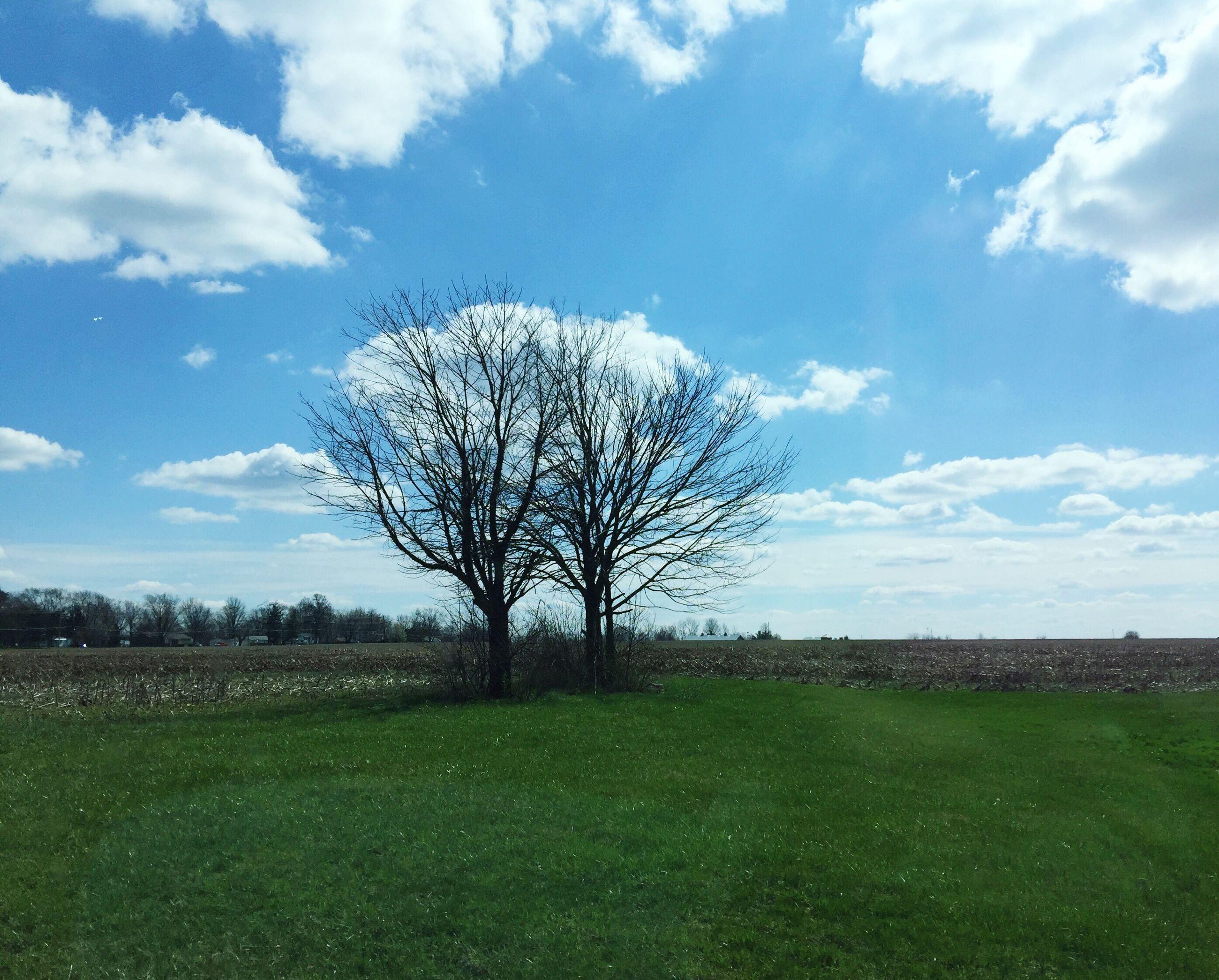 grass, tree, field, bare tree, tranquil scene, sky, landscape, tranquility, scenics, beauty in nature, nature, grassy, branch, cloud - sky, growth, cloud, single tree, rural scene, non-urban scene, solitude