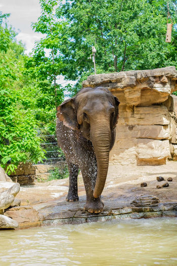 Elephant standing on rock against trees