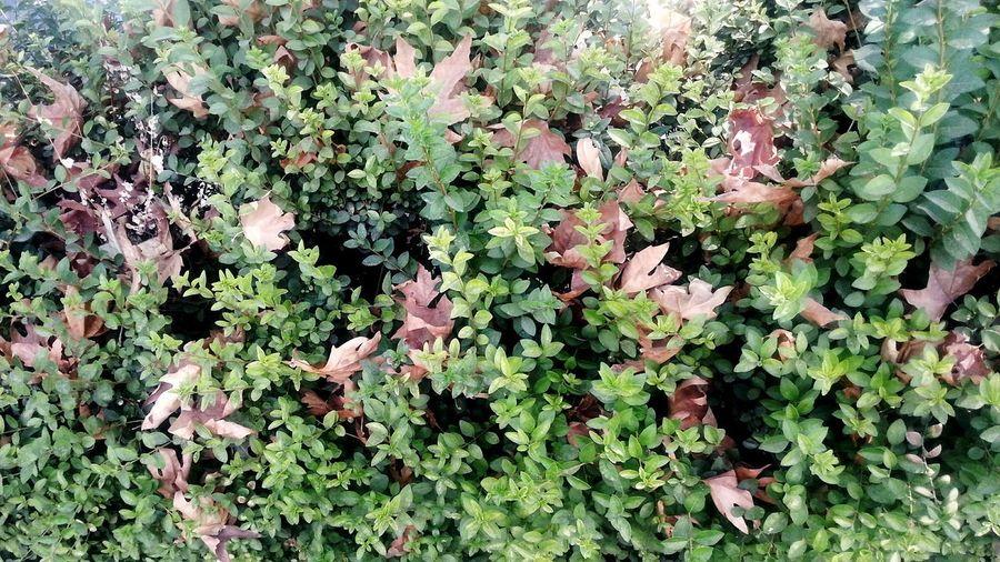 Lifecircle Leaf