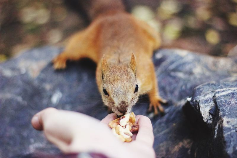Squirrel Eating From A Person's Hand