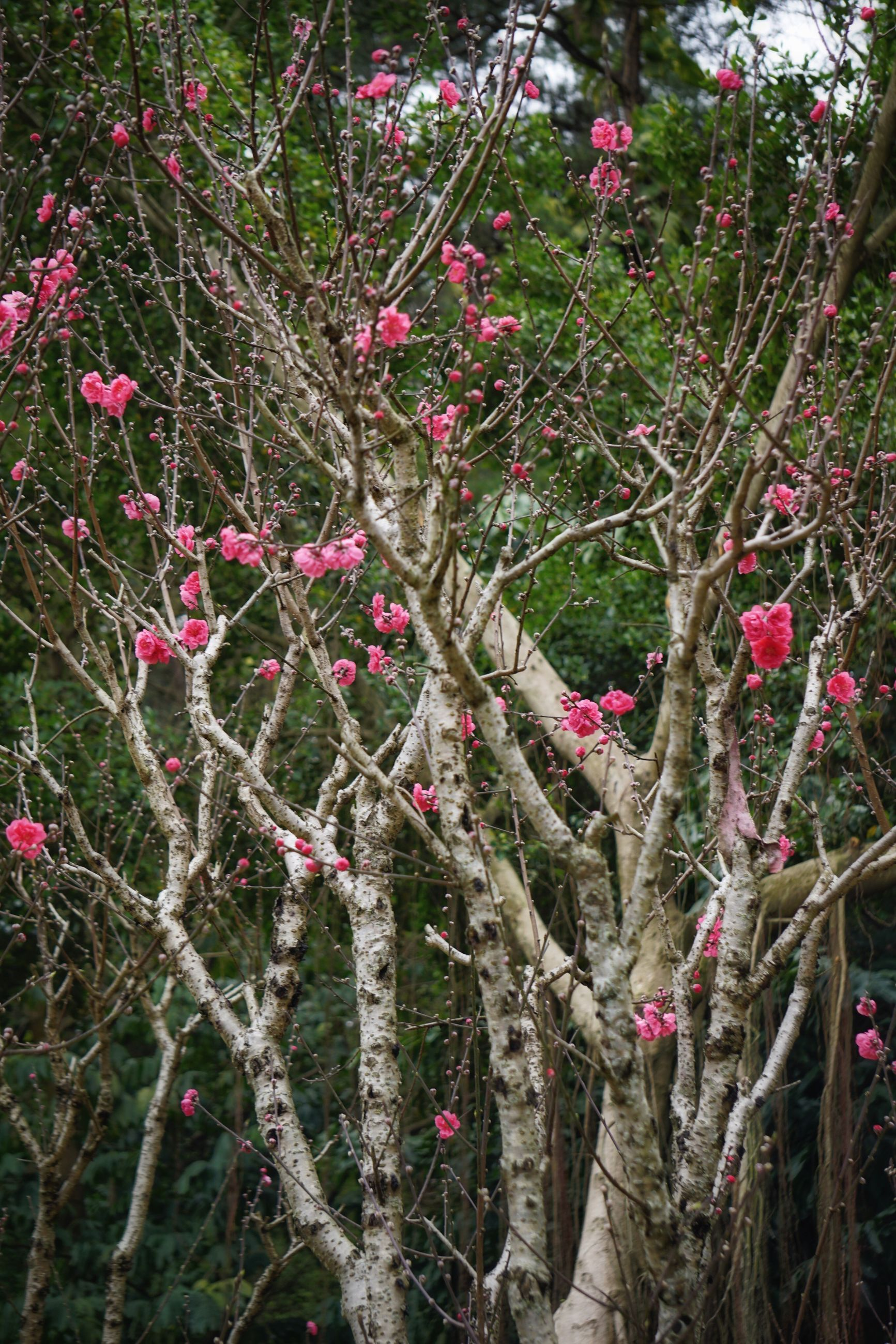 growth, branch, flower, tree, freshness, nature, plant, beauty in nature, red, pink color, leaf, growing, day, twig, outdoors, tranquility, low angle view, close-up, fragility, no people
