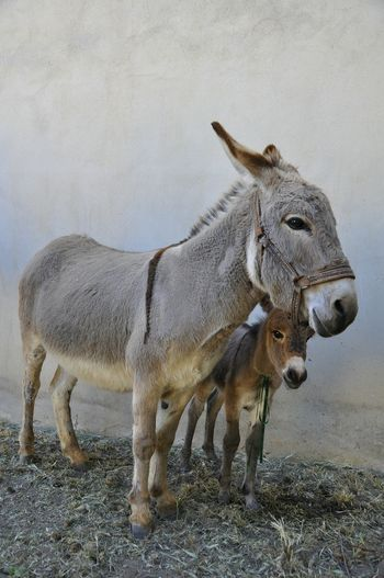 Animal Wildlife Animal No People Side View Animals In The Wild Mammal One Animal Animal Themes Nature Day Outdoors Donkey