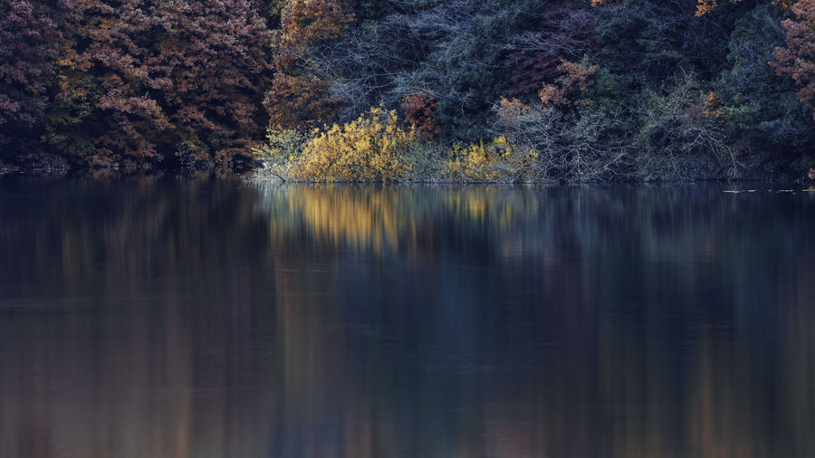 Autumn Japan Autumn Beauty In Nature Change Day Forest Lake Nature No People Outdoors Reflection Sayama-lake Scenics Sky Tranquil Scene Tranquility Tree Water