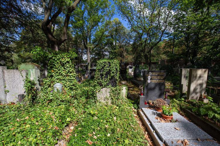 Trees growing in cemetery