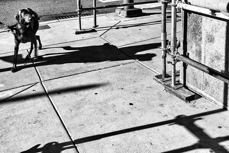Come On, This Way Dog Street Streetphotography Streetphoto_bw Streetdreamsmag Philadelphia Philly Igers_philly Igers_philly_street Whyilovephilly Savephilly Peopledelphia Howphillyseesphilly Blackandwhite Bnw_life Bnw_philly Bnw_madrid Bnw_society Bnw_captures Bnw_magazine Bnw_rose Bnw Bw Rustlord_bnw Rustlord_street rsa_bnw rsa_streetview loves_noir masters_of_bw