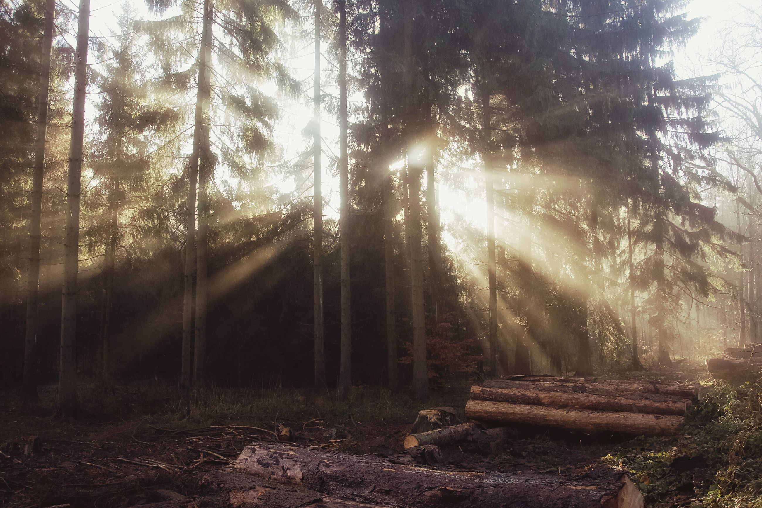 tree, forest, tranquility, tree trunk, sunbeam, tranquil scene, woodland, sunlight, nature, growth, sun, scenics, beauty in nature, lens flare, non-urban scene, wood - material, landscape, outdoors, field, day