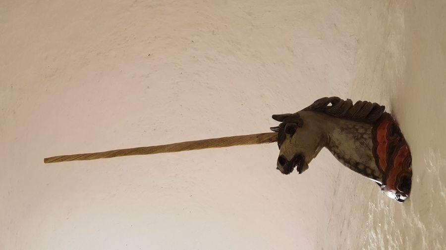 """""""Einhorn"""" im deutschen Apotheken Museum im Schloss Heidelberg. Einhorn Sculpture Germany Unicorn Unicorns Castle EyeEm Selects No People Indoors  Day Mammal"""