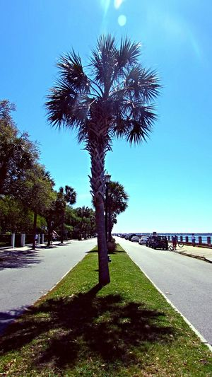South Carolina palmtree Southcarolina Plam Blue Sky