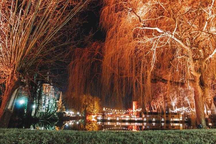 Illuminated trees in park at night