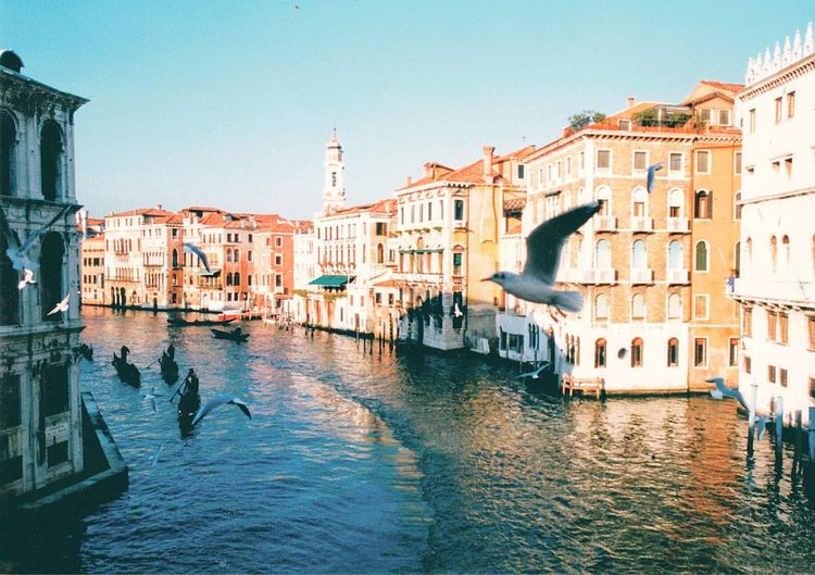 "Mobility In Mega Cities Sunshining On Buildings Along The ""streets"" Of Venice. Old Buildings Filled W/apartments, Resturaunts, & Shops Waterway Getting Crowded Seagulls Flying Around Waiting For Fish To Surfice Venice, Italy Vacation"