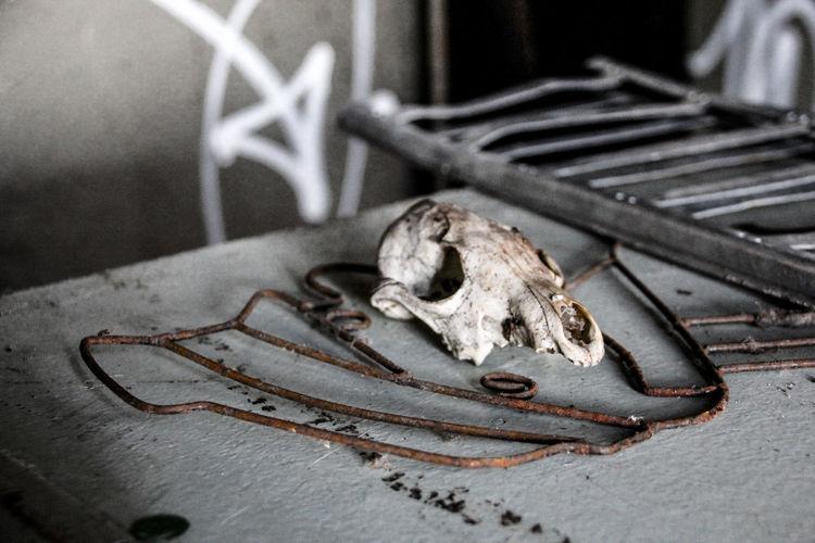 Leipzig Animal Bone Animal Skull Animal Themes Bahnbetriebswerk Close-up Day Lost Places In Leipzig Lostplaces Metal No People One Animal Outdoors Skeleton