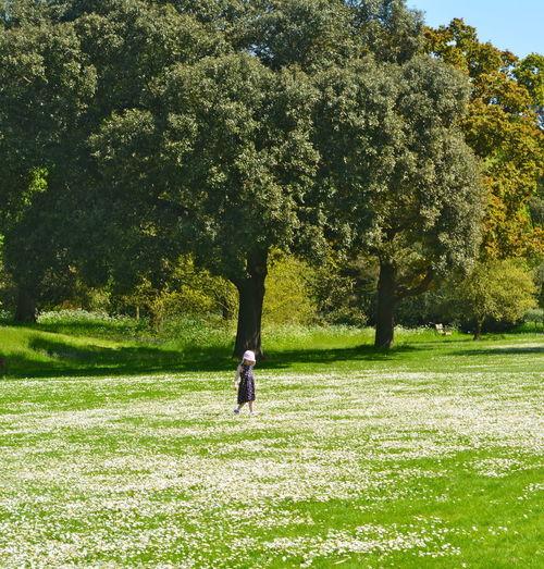 Tree Grass Real