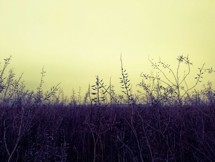 Like Fantasy Nature No People Sky Silhouette Growth Rural Scene Panoramic Field EyeEm Best Shots Outdoors Plant EyeEm Masterclass EyeEm Nature Lover Exceptional Photographs Landscape Growth Grass Grassy Tranquility Violet Eyeemphotography Yellow Color Focus On Foreground EyeEmBestPics Breathing Space The Week On EyeEm EyeEmNewHere