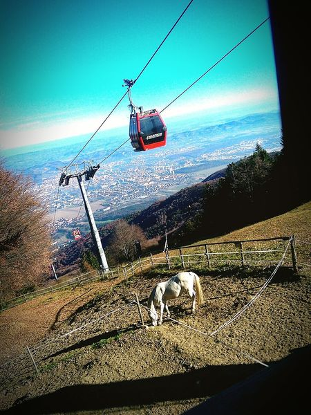 Maribor Pohorje Beautiful View Horse View
