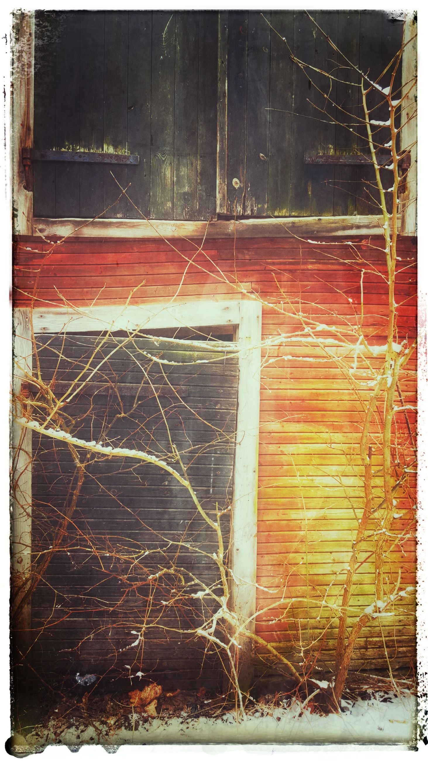 transfer print, auto post production filter, built structure, architecture, building exterior, abandoned, house, damaged, deterioration, old, wood - material, obsolete, outdoors, run-down, night, no people, brick wall, weathered, tree