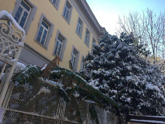Snow in Napoli Winter Snow Window Outdoors Tree Sky