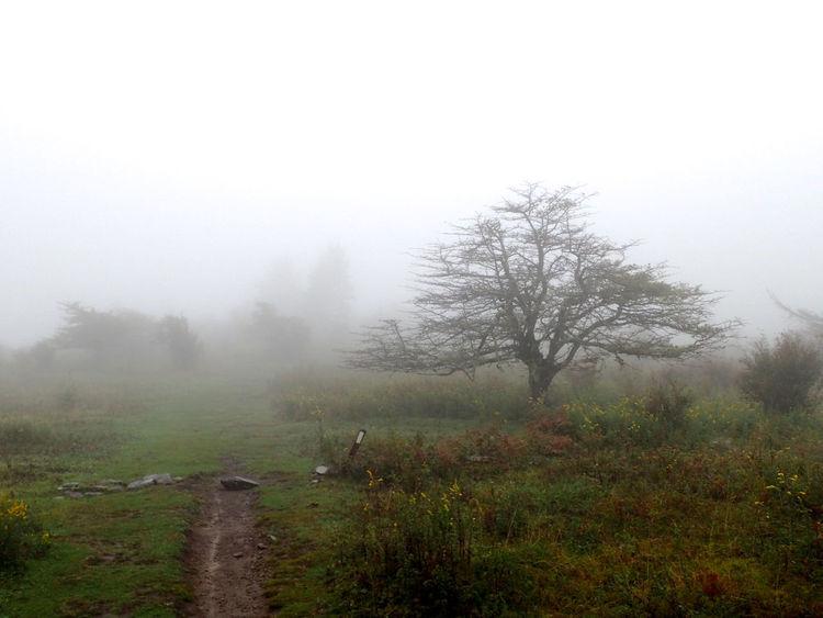 Appalachian Trail Grayson Highlands National Park Appalachian Mountains Beauty In Nature Day Field Fog Foggy Grass Greyson Highlands Hazy  Landscape Mist Nature Sky Tranquil Scene Tranquility