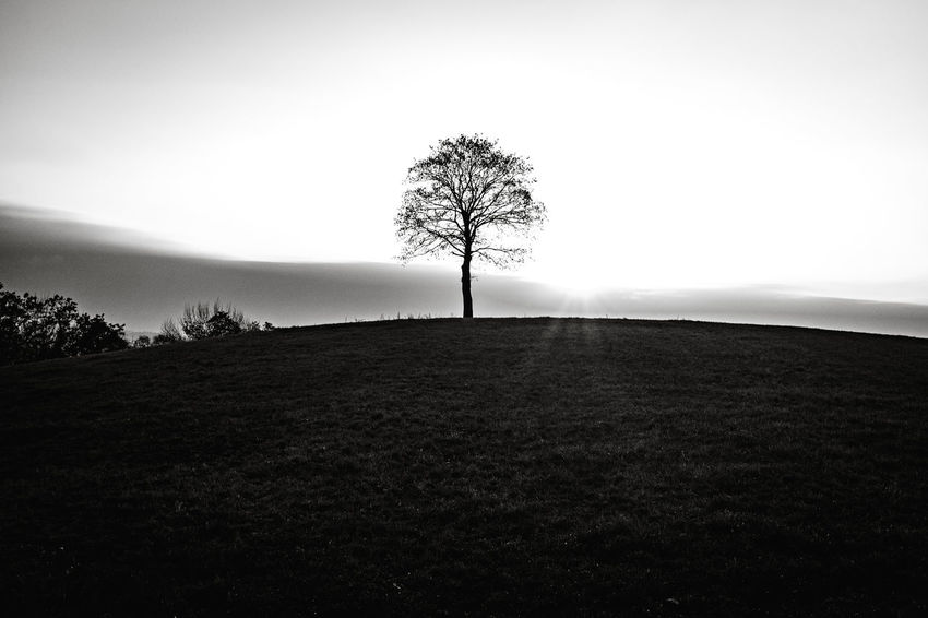 Tree Landscape Environment Sky Plant Tranquil Scene Tranquility Land Field Beauty In Nature Solitude Nature Bare Tree Scenics - Nature Silhouette Non-urban Scene Horizon Over Land No People Horizon Outdoors Isolated Rolling Landscape