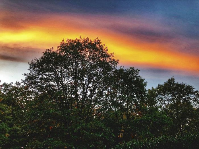 Trees in the Sky Tree Sky Plant Sunset Beauty In Nature Cloud - Sky Tranquility Nature Growth No People Orange Color Scenics - Nature Tranquil Scene Silhouette Low Angle View Outdoors Dramatic Sky Idyllic Non-urban Scene Branch