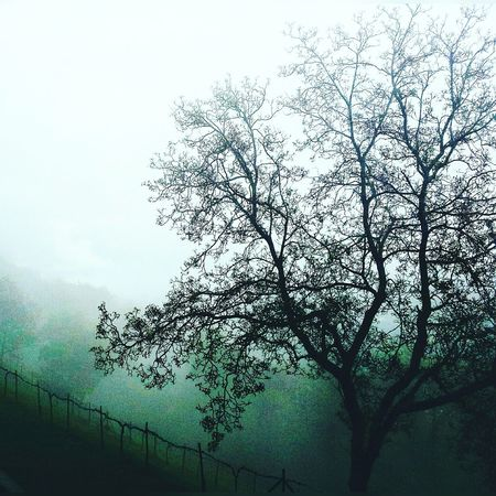 Italy Valdisusa Foggy Morning Foggy Day Foggymorning Photography Igersitalia Treees Brunches And Fog EyeEm Gallery EyeEm Best Shots Eye4photography