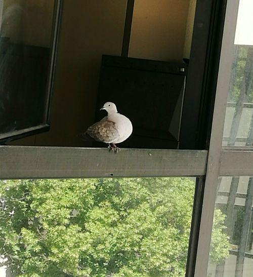 Bird at Saxa