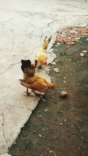 inseparable Jakarta Indonesia Family❤ Day Off Faces In Places Family Matters Home Chickens Are Pets