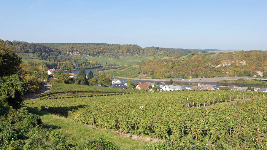 Moselle valley close to Machtum, Luxembourg, Europe Agriculture Europe Landscape Luxembourg Machtum Moselle Moselle Valey Mountain Mountain Range Nature Outdoors Panorama Rural Scene Scenery Scenics Tourism Travel Travel Destinations Village Vine Vineyard