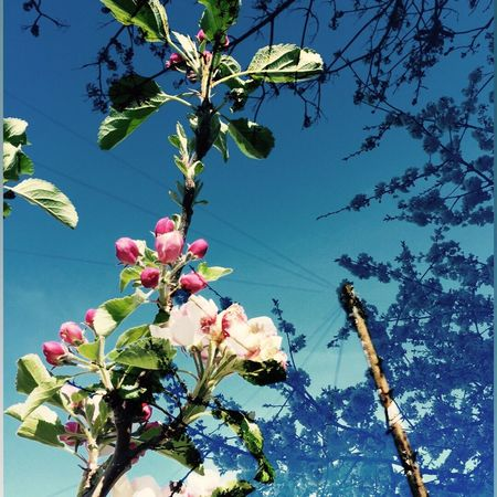Flower Growth Beauty In Nature Fragility Low Angle View Tree Branch Freshness Cut And Paste Overlay Overlay Editing Nature Petal No People Blossom Leaf Day Clear Sky Blooming Flower Head Twig Springtime Outdoors Cut And Paste