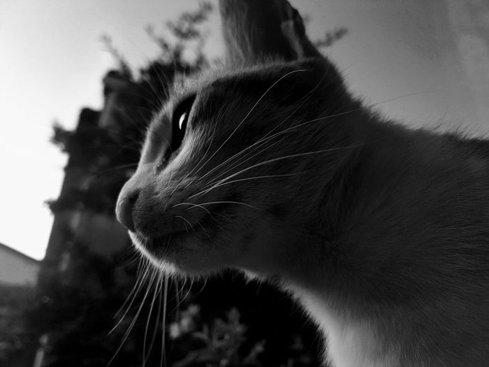 Cat 😻 Black And White Blackandwhite One Animal Animal Themes Pets Animal Domestic Animals Domestic Cat Feline Whisker Mammal Portrait Close-up Animal Wildlife No People Day Nature Outdoors Leopard