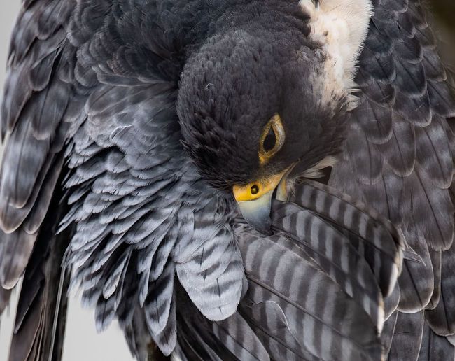 Close-up bird with spread wings