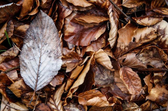 Autumn Autumn Colors Autumn🍁🍁🍁 Autumn Leaves Autumn Leafs Leaves Autumnbeauty Autumn Leaves Forest Path Forest Park Foresta Nera Foglie Foglia Texture Autum Texture Textures