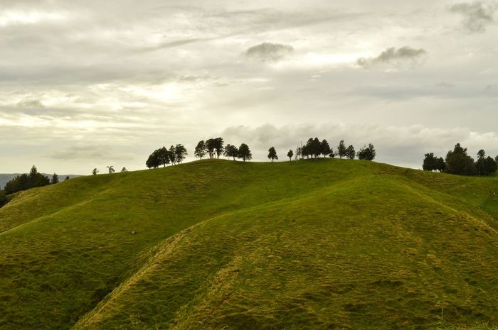 the hill 👍🙏 hills are good 👍😊 this one looked so nice I decided to imprint it on my light catcher. 📷📷😁😁 Hillside Hills Hilltop Hill Farmland Tress On A Hill Grey Sky Rural Scenes Rural Landscape Landscape Landscape_Collection Things You See Kiwi Clicker Eye4photography  From My Point Of View Getting Inspired New Zealand Scenery EyeEm Best Shots Nature EyeEm Nature Lover EyeEm Masterclass Skylovers Tadaa Community Hello World Naturelovers