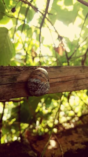 Snail Garden Tree Branch Leaf Close-up Plant Shell