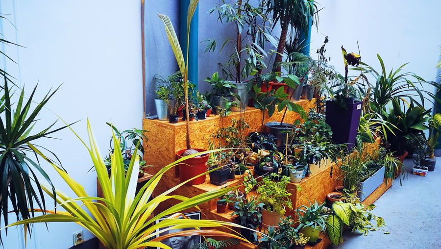 Colourful Urban Green House Plant Life Urban Urbanphotography Botany Tree Flower Window Close-up Plant Greenhouse Leaf Vein Leaves Growing Genetic Modification Plant Nursery Botanical Garden Gardening Young Plant Blooming Blossom Capture Tomorrow
