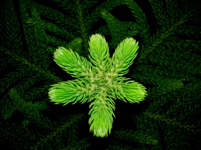 Leaf Pattern Plant Growth Leaf Green Color Close-up Nature Freshness Fragility Beauty In Nature Green New Life Outdoors Tranquility Lush Foliage Frond Growing Botany Full Frame Nature In The Night Huawei Shots Huawei Y5