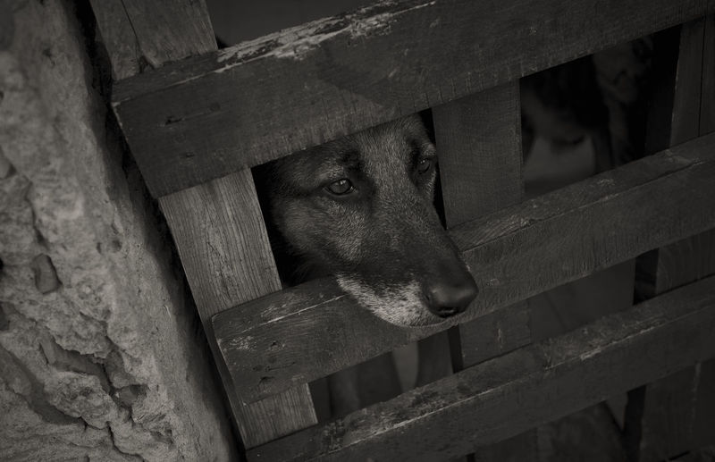 Close-up of dog looking through fence